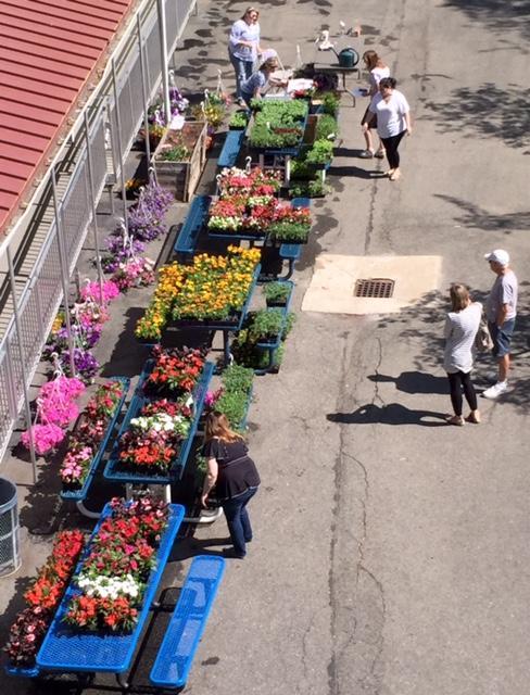 The Plant Sale