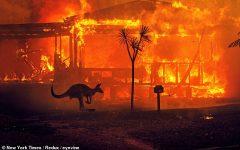 Australia Wildfires Update